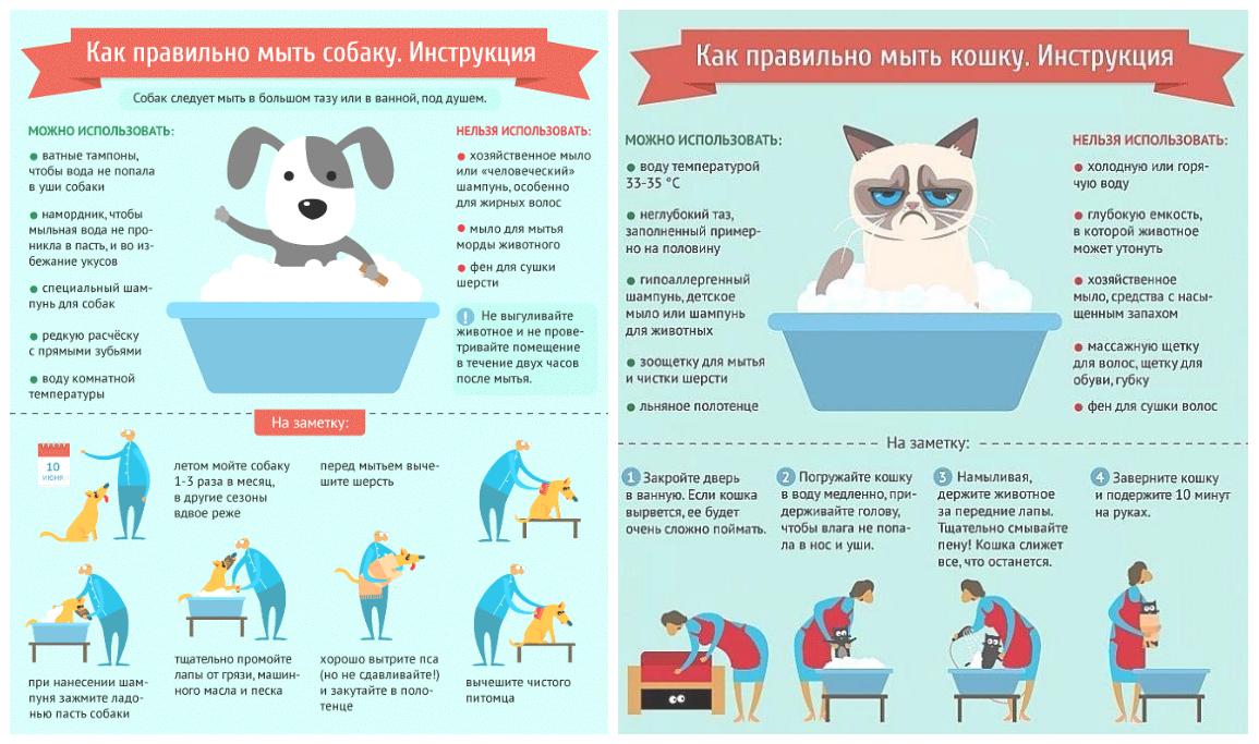 Инфографика пример