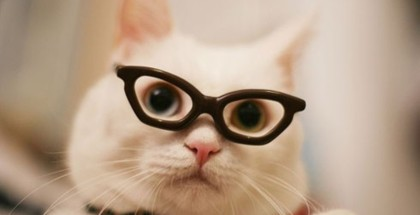 cat in the glasses